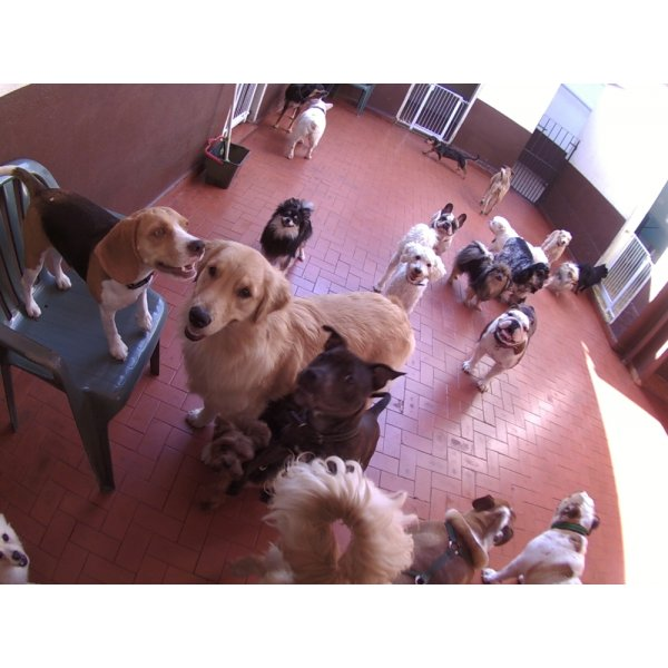 Daycare Dogs